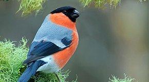 Save a bird!