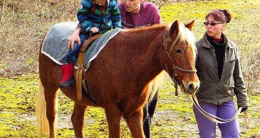 Коні лікують