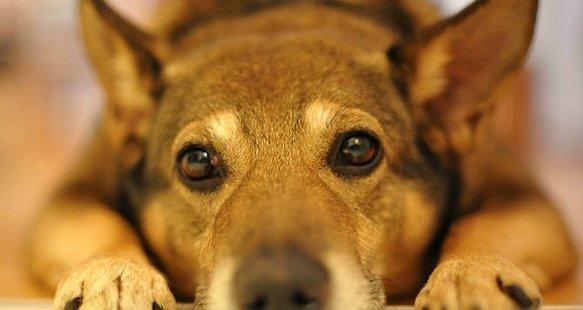 Безпритульні собаки не плачуть