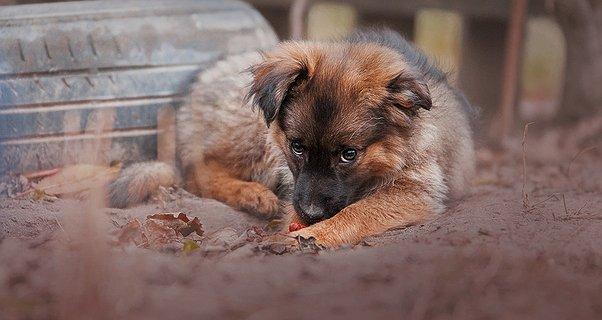 Збережемо здоров'я собак разом!
