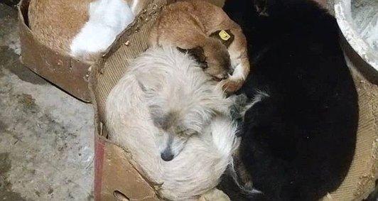 Теплі хатинки – щасливі тваринки
