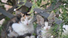 Проект стерилизации бездомных животных