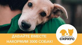Давайте накормим 3000 собачек вместе!