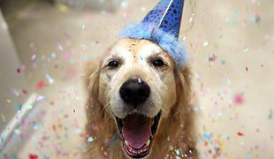 День народження Софії - свято для хвостиків!