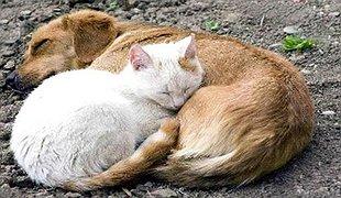 Допомога безпритульним тваринам